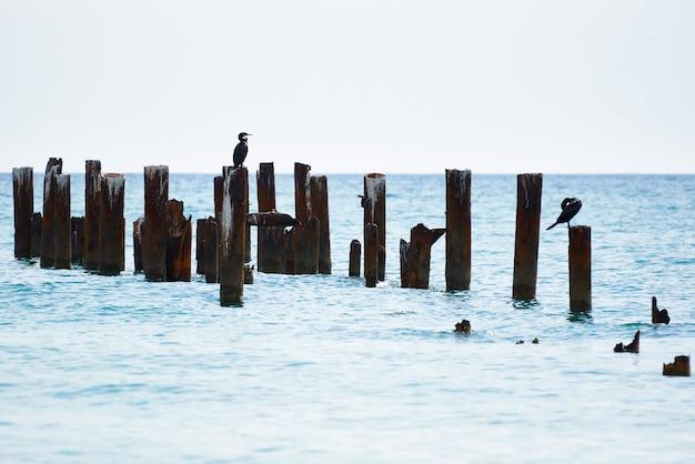 Restos de cais com pássaros no mar.