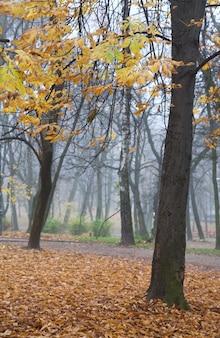 Restos de folhagem de outono, caminho de pedestres e folhas caindo no parque da cidade