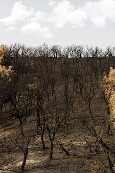 Restos de um incêndio florestal