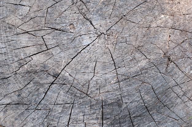 Resumo de textura de madeira velha de toco de árvore rachada
