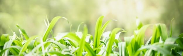 Resumo desfocado de plantas naturais da natureza de folha verde, conceito de página de capa de ecologia.