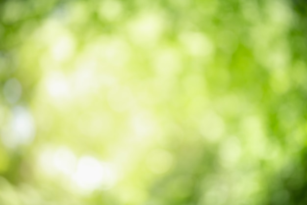 Resumo desfocado fora de foco e fundo borrado de folha verde sob a luz do sol com bokeh.