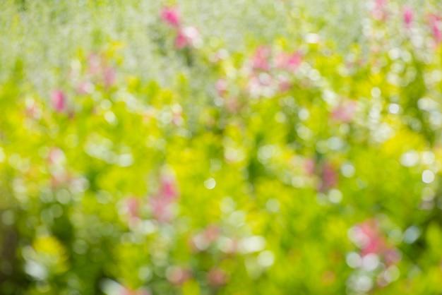 Resumo e folha verde natural bonita desfocagem o fundo claro bokeh