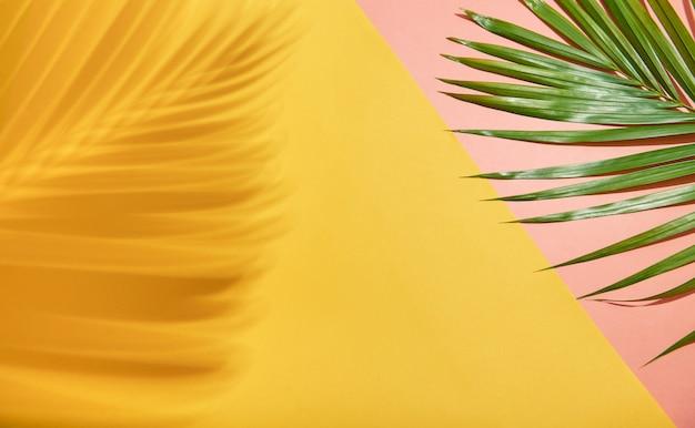 Resumo folha de palmeira e sombra reflexão sobre fundo colorido