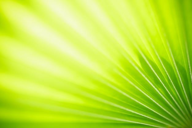 Resumo turva fora de foco e turva fundo de natureza de folha verde sob a luz do sol com bokeh e cópia de espaço usando como plano de fundo a paisagem de plantas naturais, conceito de papel de parede de ecologia.