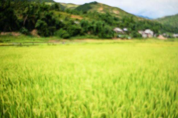 Resumo turva fundo de campo de arroz.