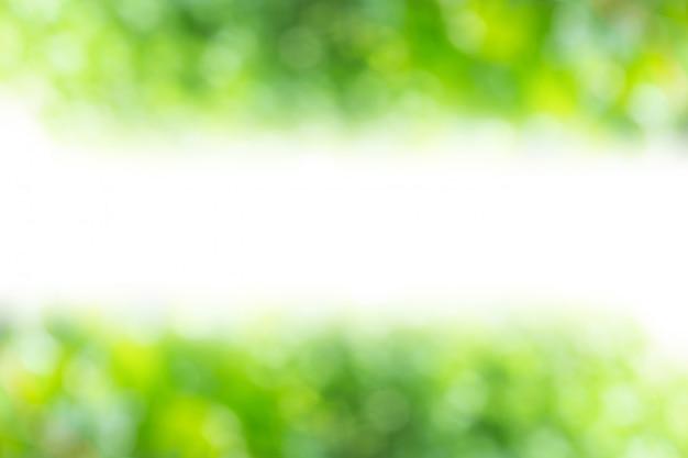 Resumo verde da luz solar de natureza borrão com espaço livre médio branco para design