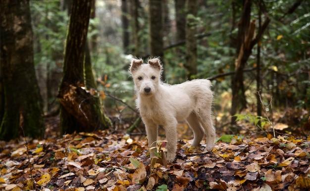 Retrato adorável de filhote de cachorro branco saudável e feliz incrível