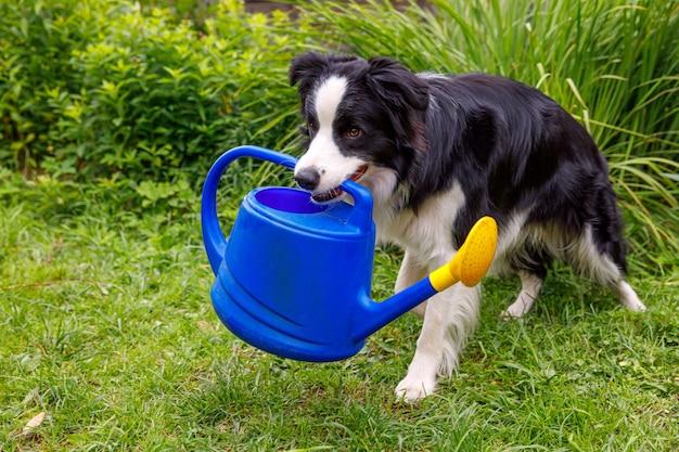 Retrato ao ar livre de um cãozinho sorridente fofo segurando um regador no jardim