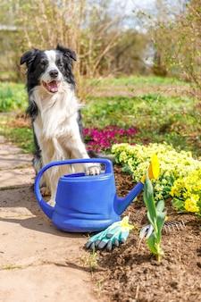 Retrato ao ar livre do cão fofo border collie com regador no fundo do jardim