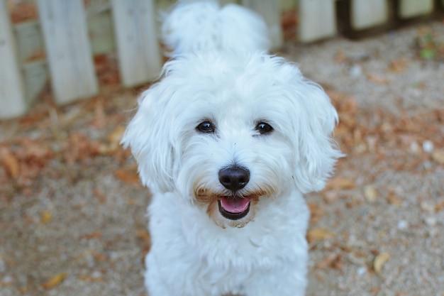 Retrato cão feliz contra vizinhos cerca de madeira