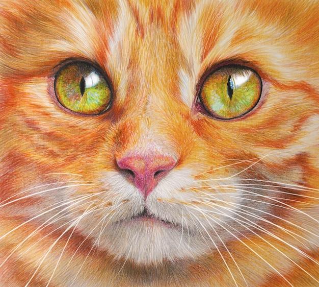 Retrato colorido handdrawing de um gato. animal de estimação em fundo branco. desenho à mão realista