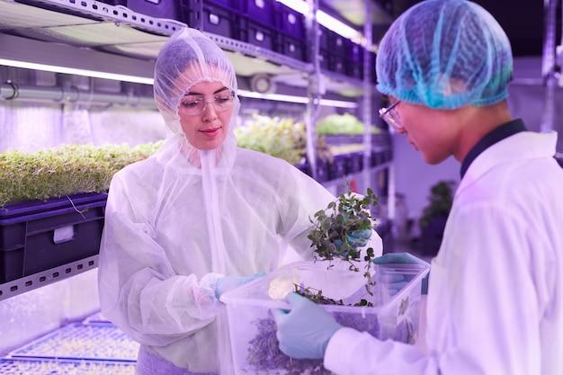 Retrato da cintura para cima de dois engenheiros agrícolas cuidando de plantas em uma estufa iluminada por luz azul, copie o espaço