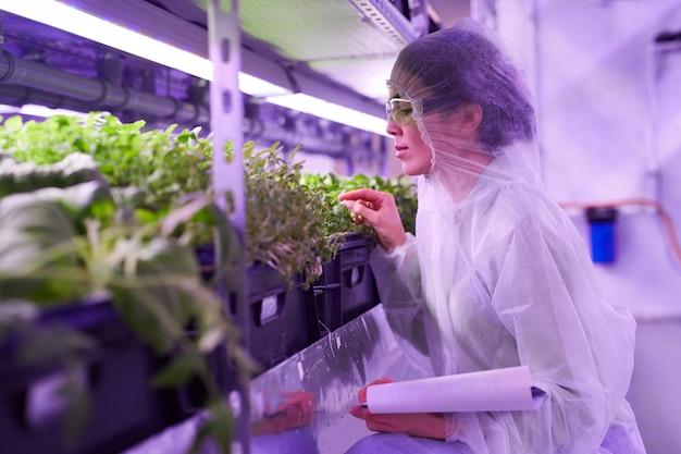 Retrato da vista lateral de uma engenheira agrícola examinando plantas em uma estufa iluminada por uma luz azul, copie o espaço