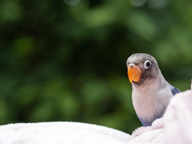 Retrato, de, a, cute, amor, pássaro