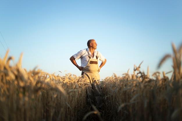 Retrato de agricultor agrônomo sênior em um campo de trigo, olhando à distância