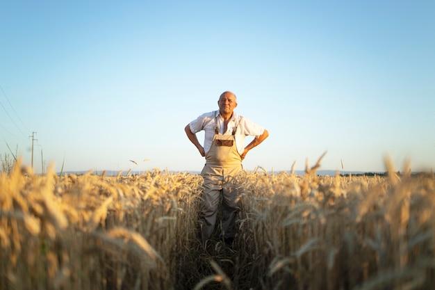 Retrato de agricultor agrônomo sênior no campo de trigo verificando as colheitas antes da colheita