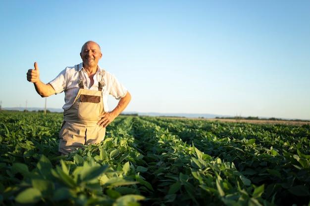 Retrato de agricultor agrônomo sênior trabalhador em um campo de soja segurando o polegar para cima, verificando as colheitas antes da colheita