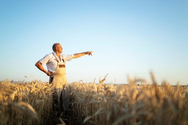Retrato de agrônomo fazendeiro sênior no campo de trigo, olhando à distância e apontando o dedo