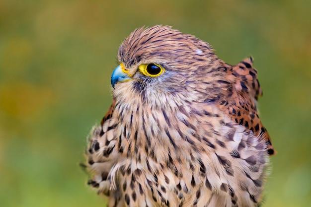Retrato de ave de rapina