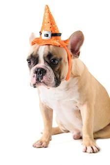 Retrato de buldogue francês bonito com chapéu halloween isolado