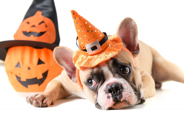 Retrato de buldogue francês com chapéu de halloween