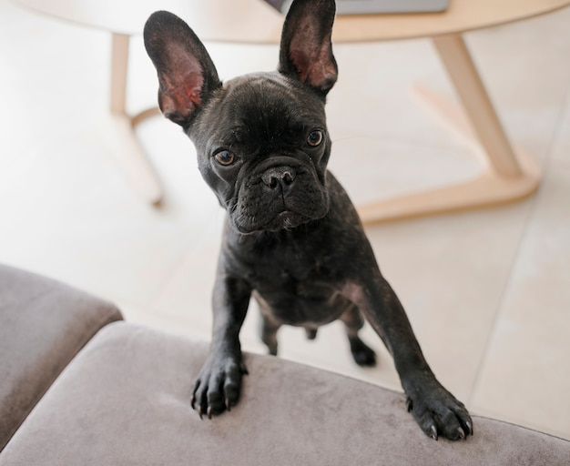 Retrato de cachorrinho adorável