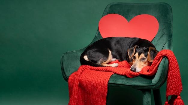 Retrato de cachorrinho fofo sentado em uma cadeira