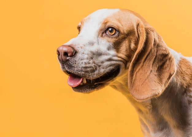 Retrato de cachorro adorável, olhando para longe