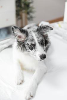 Retrato, de, cachorro branco, ligado, tabela, em, clínica