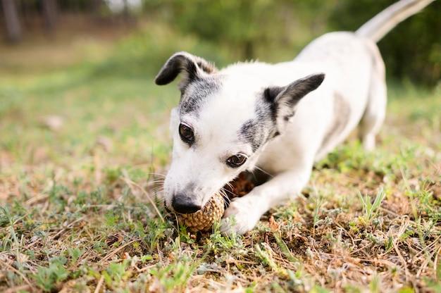 Retrato de cachorro fofo brincando na natureza