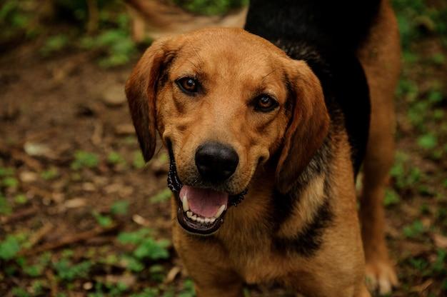 Retrato de cachorro marrom na floresta
