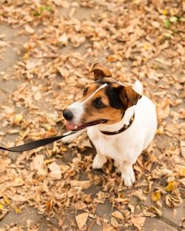 Retrato de cachorro pequeno bonito ao ar livre