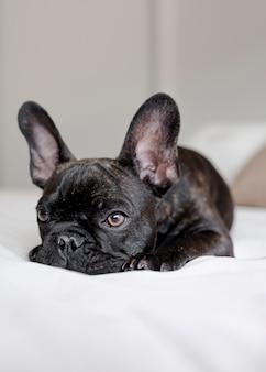Retrato de cachorro pequeno bonito descansando