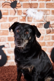 Retrato de cachorro preto com auréola no dia das bruxas