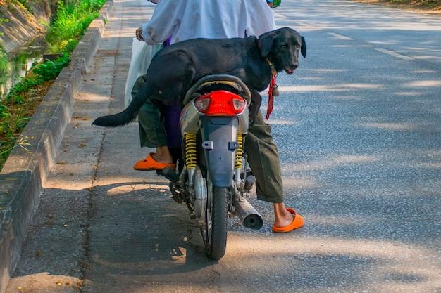 Retrato, de, cachorro preto, sentando, ligado, a, motocicleta