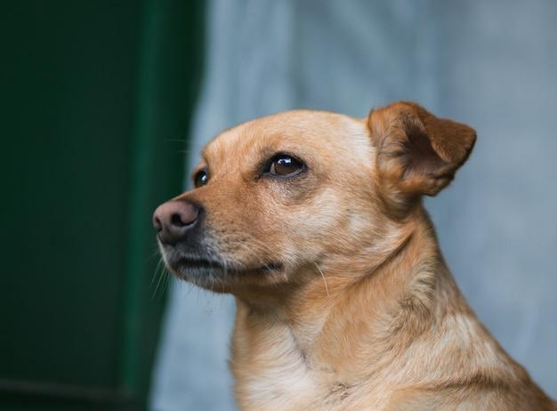Retrato de cachorro triste