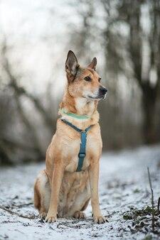 Retrato de cão vira-lata sentado