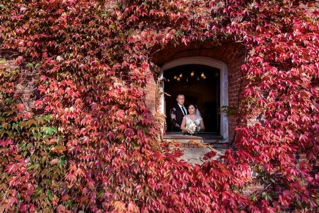 Retrato de casal de noivos na janela na parede de pedra coberta de hera vermelha