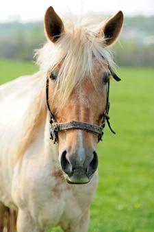 Retrato de cavalo em close-up em dia de verão