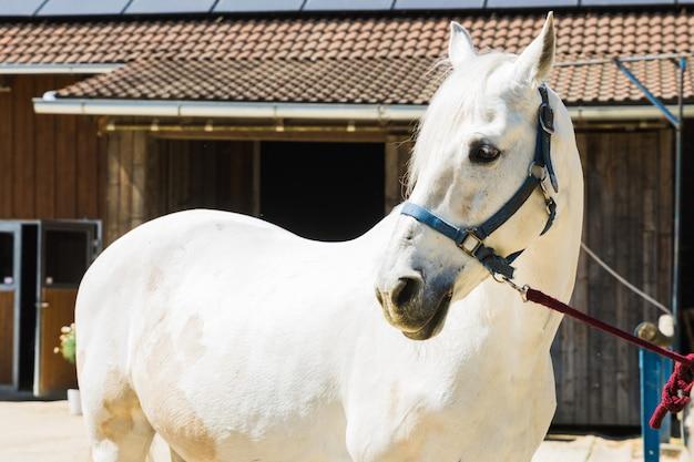 Retrato, de, cavalo, ligado, a, exterior