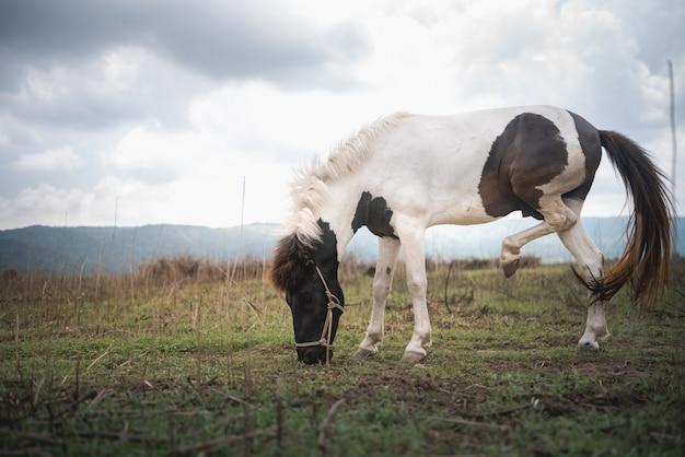 Retrato de cavalo no gramado e montanha céu azul