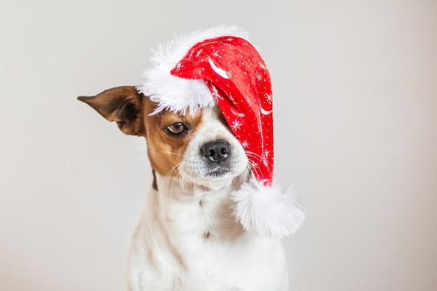 Retrato de chihuahua com chapéu de natal em um olho