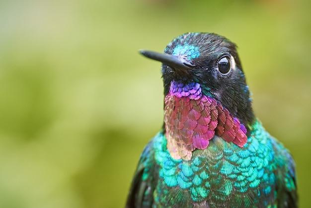 Retrato de colibri colorido verde e magenta