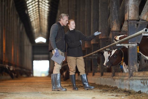 Retrato de corpo inteiro de dois trabalhadores apontando para a vaca enquanto inspeciona o gado em uma fazenda de gado leiteiro, copie o espaço