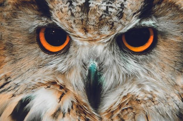 Retrato de corujas. olhos de coruja