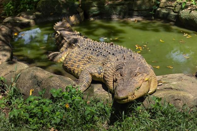 Retrato de crocodilos curtindo o sol