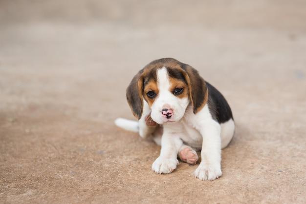 Retrato, de, cute, filhote cachorro, beagle