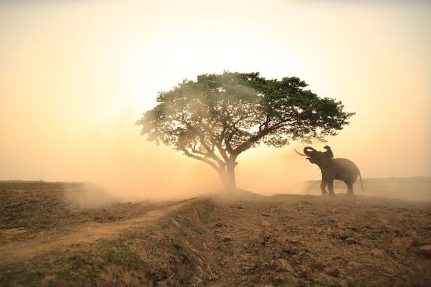 Retrato de elefante e mahout na floresta contra o nascer do sol.