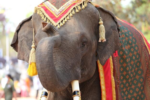 Retrato de elefante e mahout na floresta.